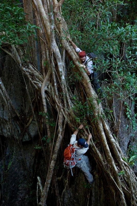 Кам'яний ліс Мадагаскару (3)