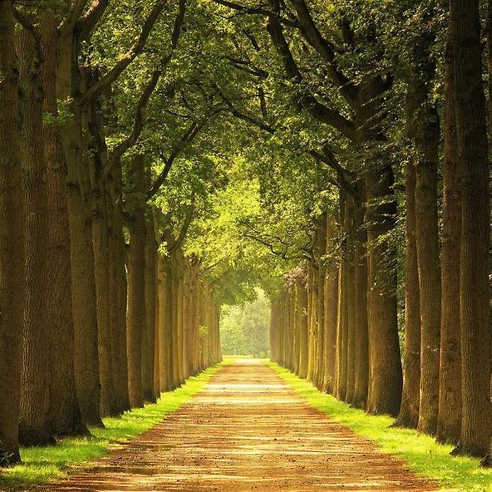 Фотографії найкрасивіших доріг (6)