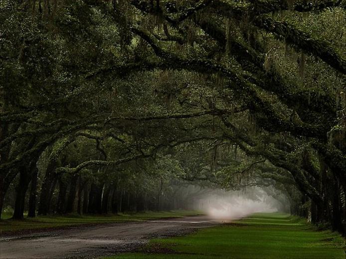 Фотографії найкрасивіших доріг (5)