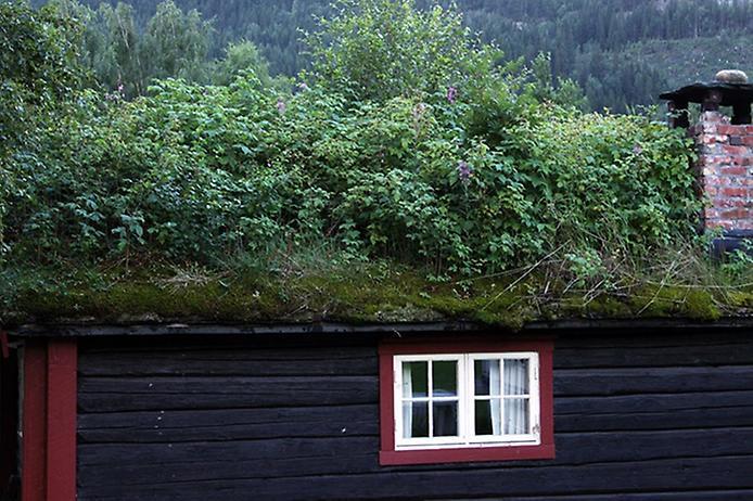 Унікальні зелені дахи в Норвегії (12)