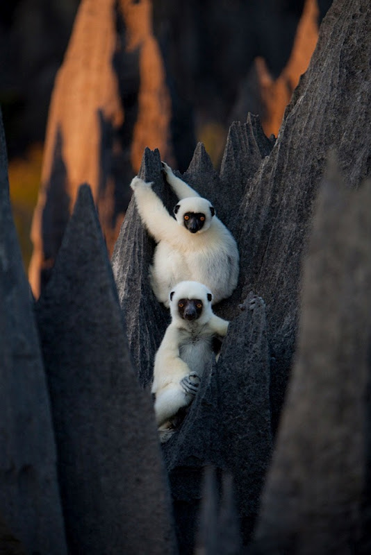 Кам'яний ліс Мадагаскару (10)