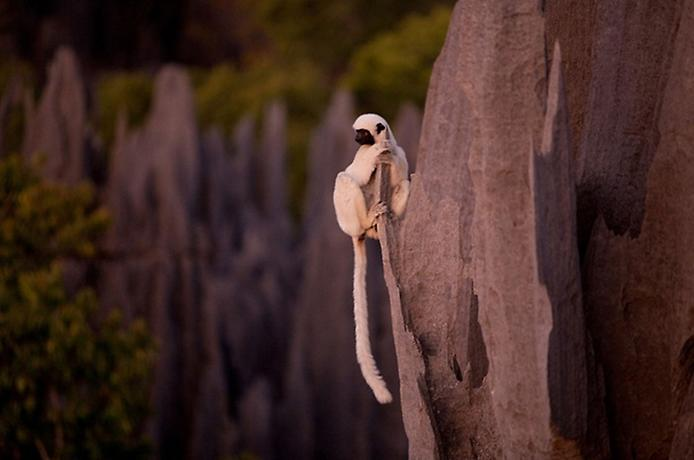 Кам'яний ліс Мадагаскару (8)