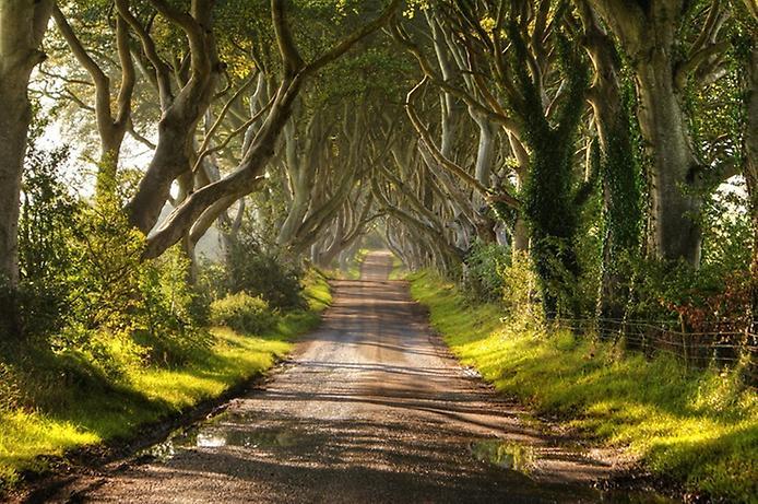 Темний тупик. Дивовижна дорога в Ірландії (8)