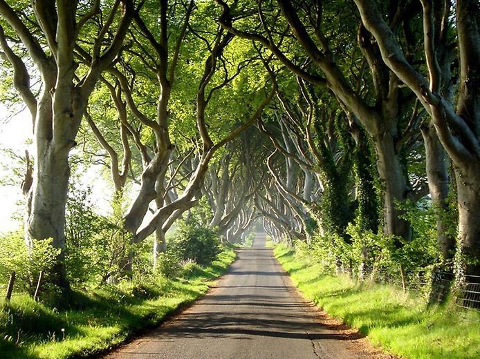 Темний тупик. Дивовижна дорога в Ірландії (7)