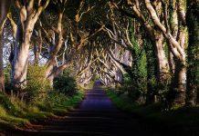 Темний тупик. Дивовижна дорога в Ірландії (6)