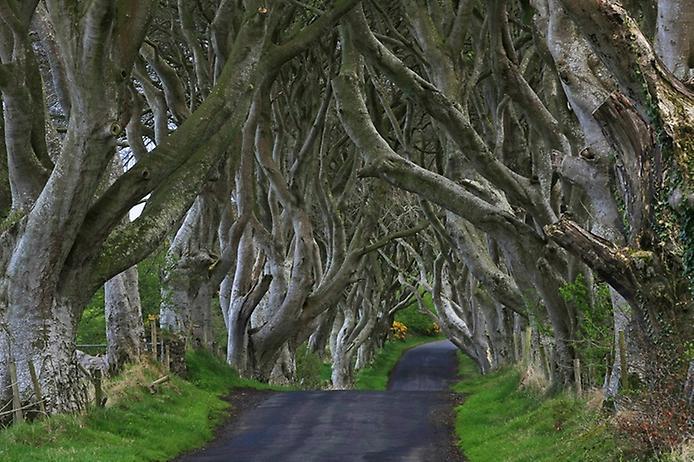 Темний тупик. Дивовижна дорога в Ірландії (5)