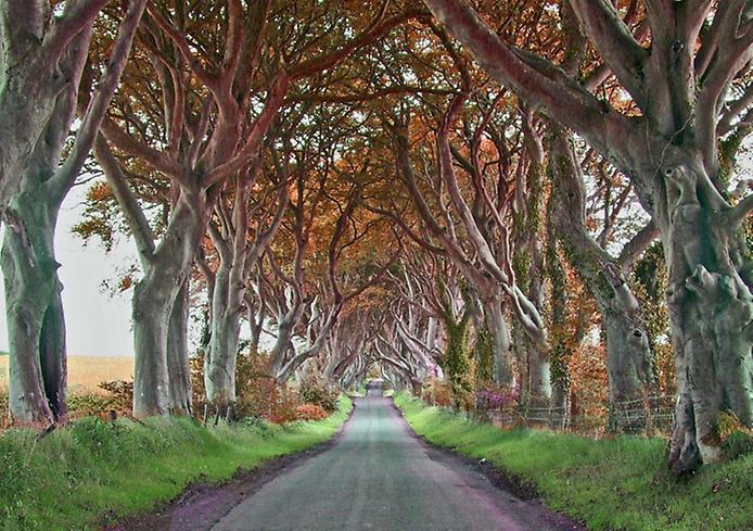 Темний тупик. Дивовижна дорога в Ірландії (4)