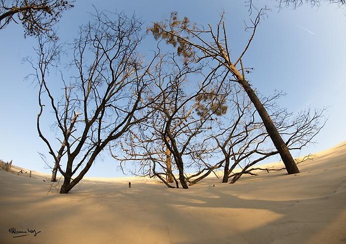 Пила: Неймовірна рухома дюна затоки Аркахон (4)