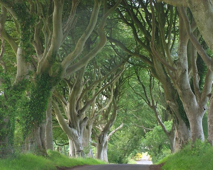 Темний тупик. Дивовижна дорога в Ірландії (3)