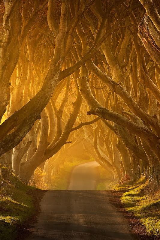 Темний тупик. Дивовижна дорога в Ірландії (2)