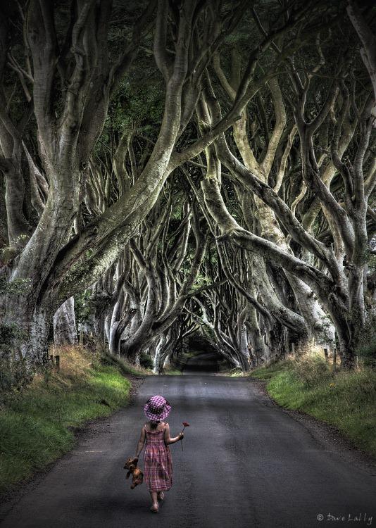 Темний тупик. Дивовижна дорога в Ірландії (1)