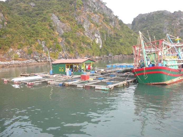 Плаваючі села острова Кат Ба у В'єтнамі (3)
