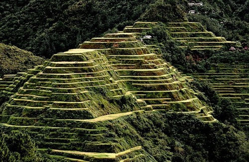 Рисові тераси в Банауе (11)