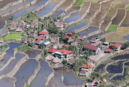 Рисові тераси в Банауе (10)