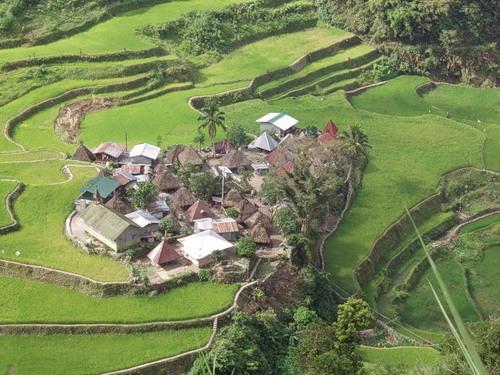 Рисові тераси в Банауе (9)