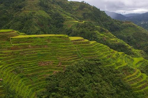 Рисові тераси в Банауе (8)