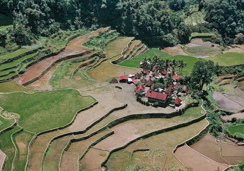 Рисові тераси в Банауе (7)