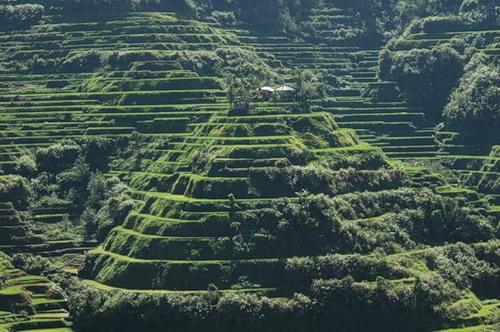 Рисові тераси в Банауе (6)