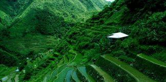 Рисові тераси в Банауе (5)