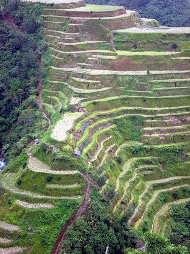 Рисові тераси в Банауе (4)