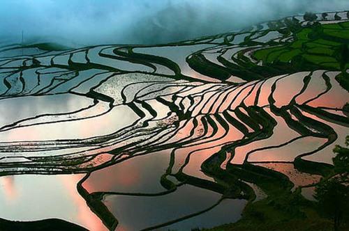 Рисові тераси в Банауе (3)