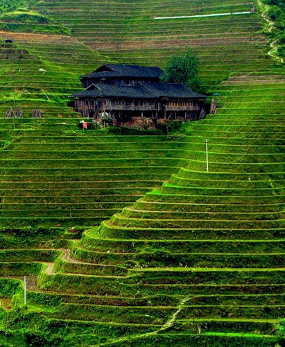 Рисові тераси в Банауе (2)