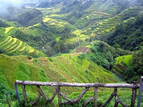 Рисові тераси в Банауе (1)