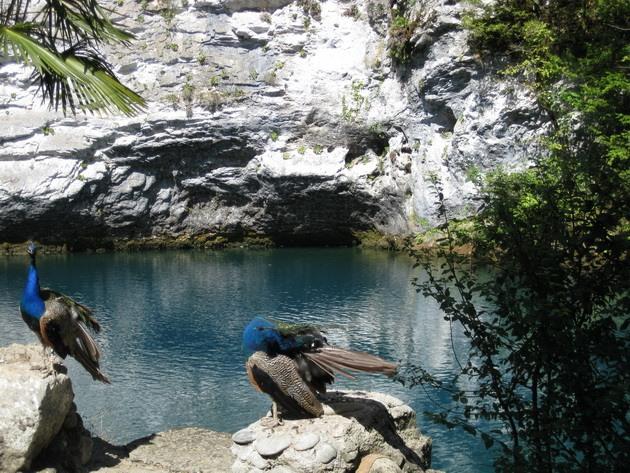 Синє озеро в Абхазії (7)