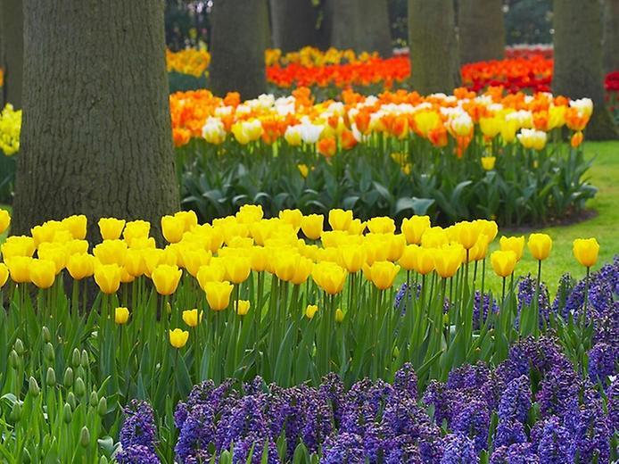Буяння кольорів. Квіткові сади Кекенхоф (1)