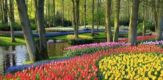 Буяння кольорів. Квіткові сади Кекенхоф (9)