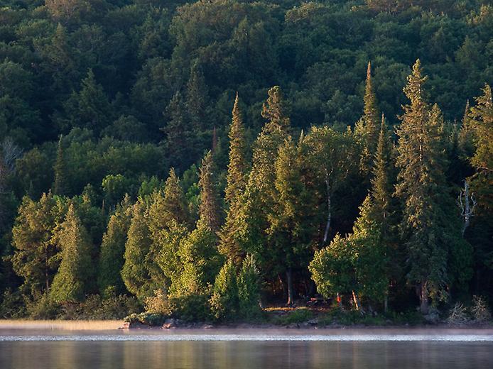 Провинциальный парк Алгонкин (5)