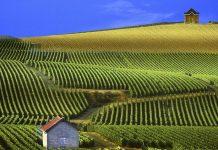 Найзнаменитіші області виноробства (9)