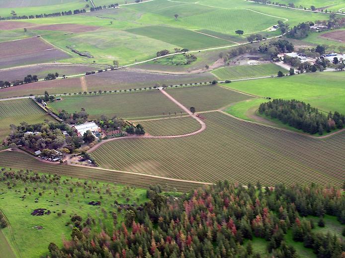 Долина Баросса - центр виноробства Австралії (7)