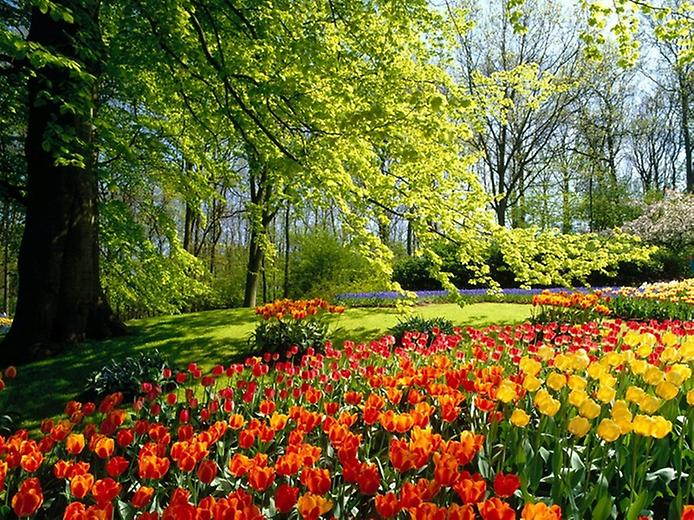 Буяння кольорів. Квіткові сади Кекенхоф (8)
