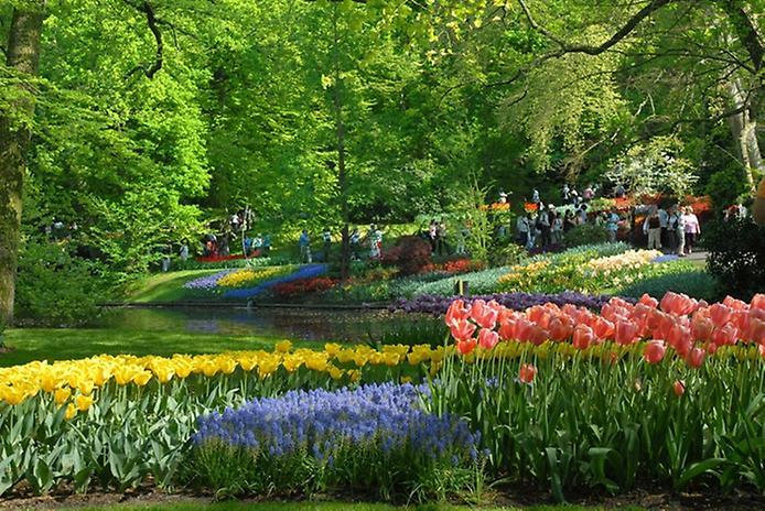Буяння кольорів. Квіткові сади Кекенхоф (7)
