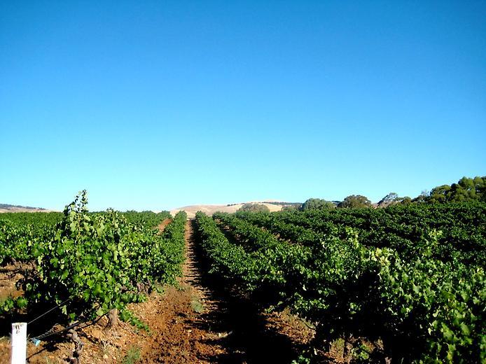 Долина Баросса - центр виноробства Австралії (6)