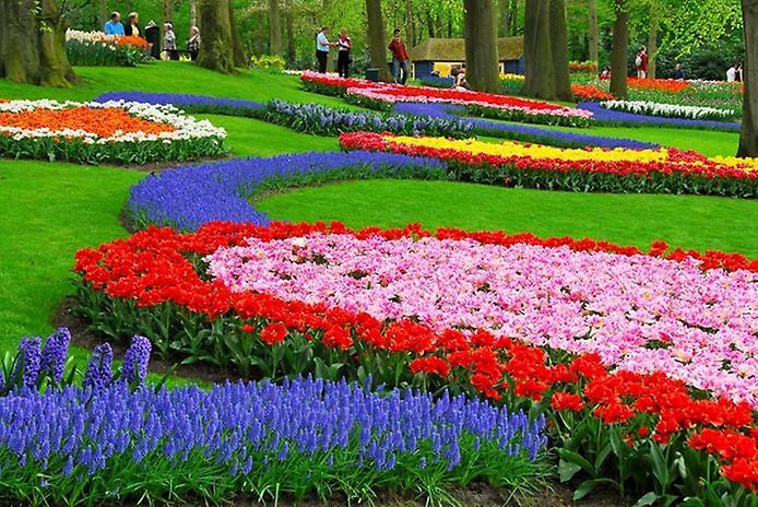 Буяння кольорів. Квіткові сади Кекенхоф (6)
