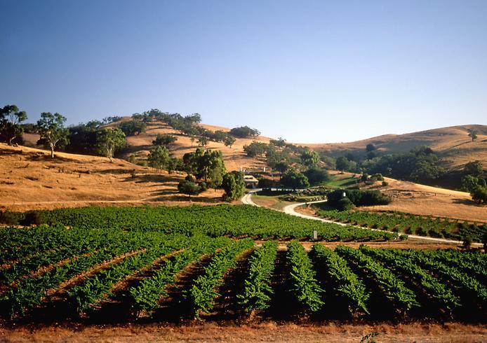Долина Баросса - центр виноробства Австралії (4)