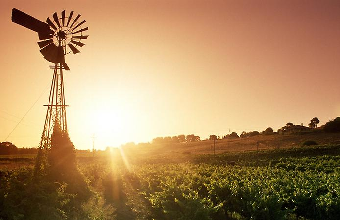 Долина Баросса - центр виноробства Австралії (3)