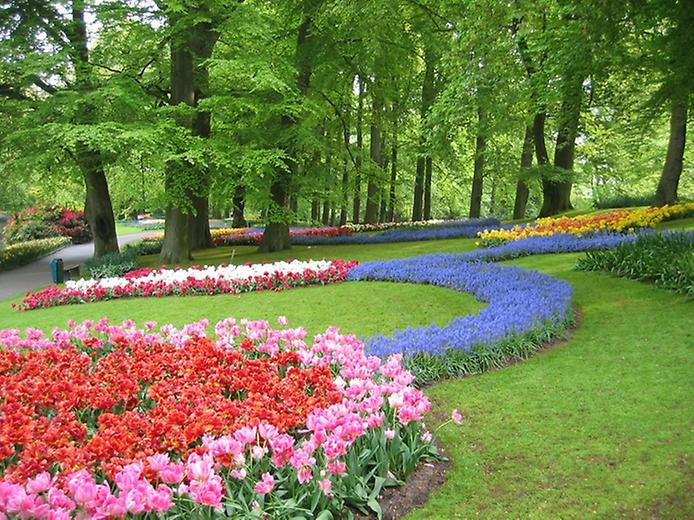Буяння кольорів. Квіткові сади Кекенхоф (5)