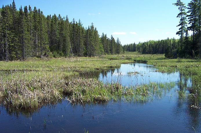 Провинциальный парк Алгонкин (7)