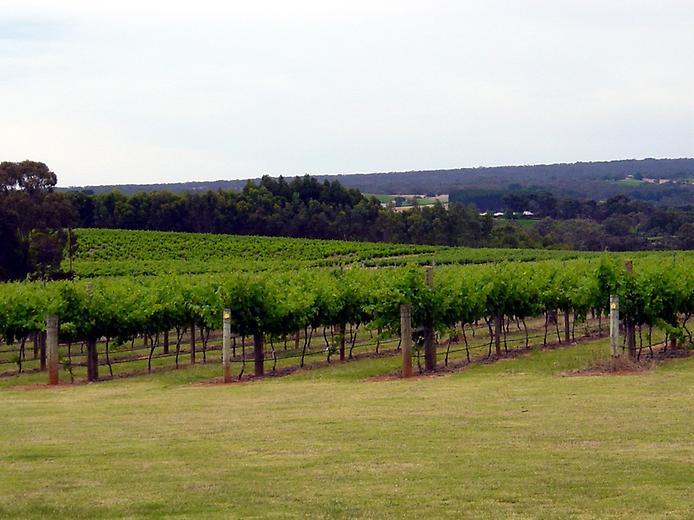Долина Баросса - центр виноробства Австралії (2)