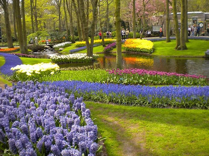 Буяння кольорів. Квіткові сади Кекенхоф (4)