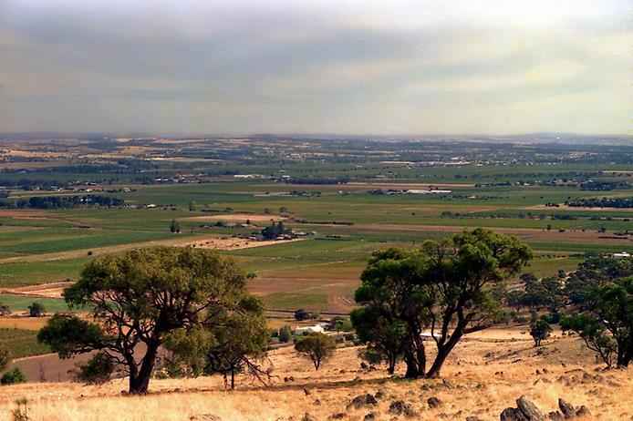 Долина Баросса - центр виноробства Австралії (1)