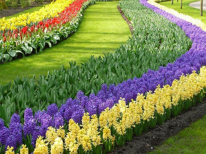 Буяння кольорів. Квіткові сади Кекенхоф (2)