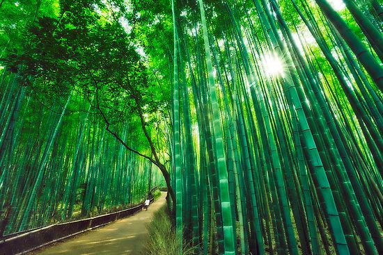 Китайське катування бамбуком