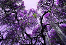 Каваті Фудзі. Сад казкових квітів (5)