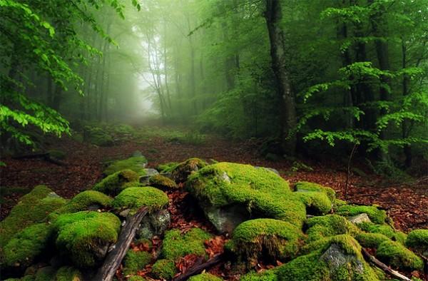 30 живописних пейзажів, які захоплюють та надихають. Найкращі пейзажі зі всього Світу (18)