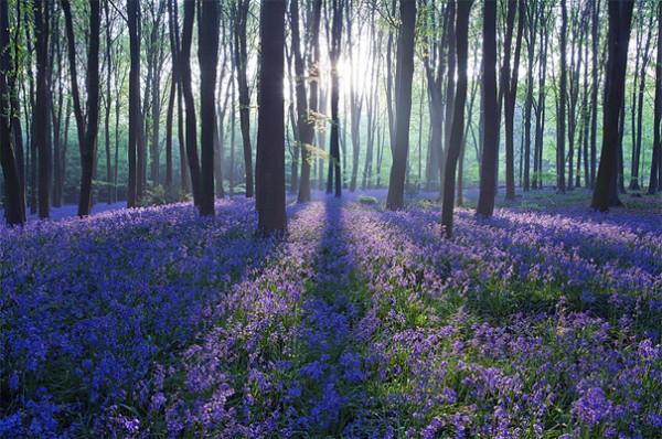 30 живописних пейзажів, які захоплюють та надихають. Найкращі пейзажі зі всього Світу (14)