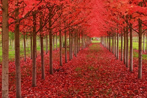 30 живописних пейзажів, які захоплюють та надихають. Найкращі пейзажі зі всього Світу (8)